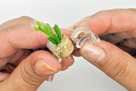 Babyplante mini plante cactus succulente porte clé miniature