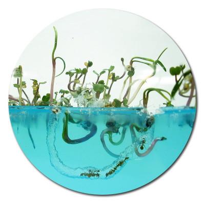 vivarium fourmis fourmilière gel antfarm antquarium ant fourmis colonie observation graines plantes plantarium