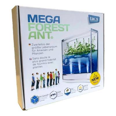 mega forest ant vivarium fourmis fourmilière gel antfarm antquarium colonie observation coffret