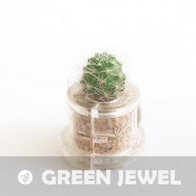 Babyplante Green Jewel petite plante mini cactus succulente porte clé