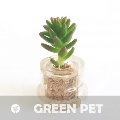 Babyplante Green Pet petite plante mini cactus succulente porte clé