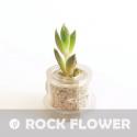 """Babyplante """"Chance"""", la mini plante de poche"""