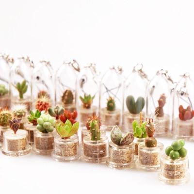 Babyplante petite plante mini cactus succulente porte cle de poche miniature