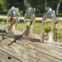 Crystal toys jaune, germination et croissance de cristaux