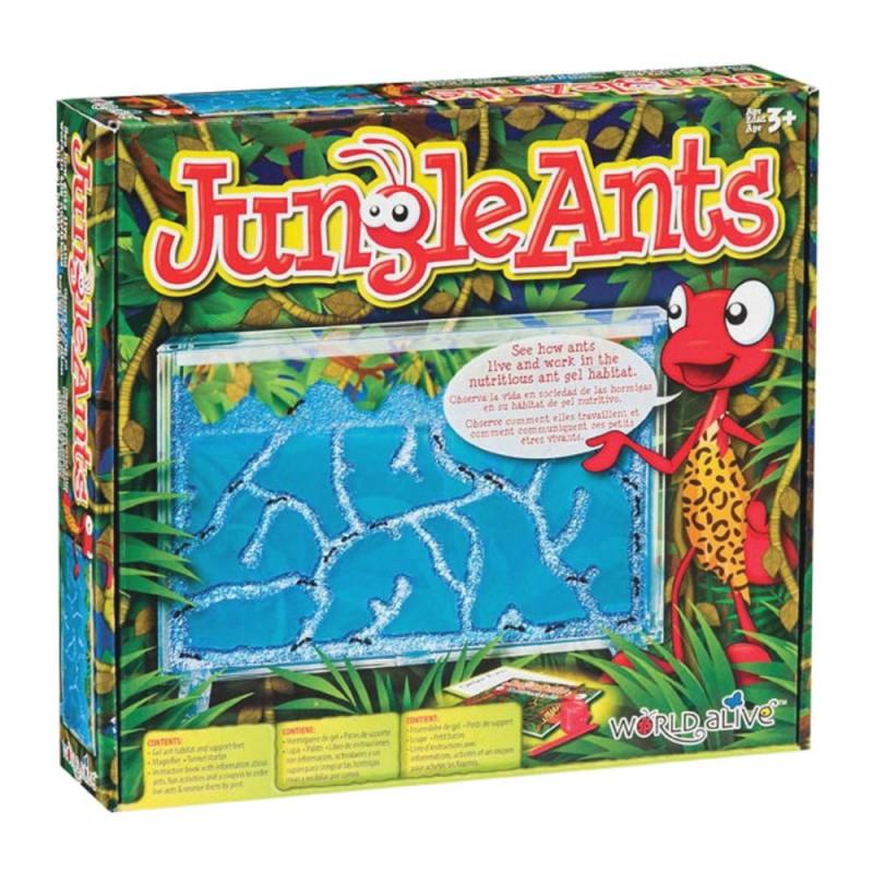 vivarium fourmis fourmilière gel antfarm antquarium ant fourmis colonie observation jungle ants