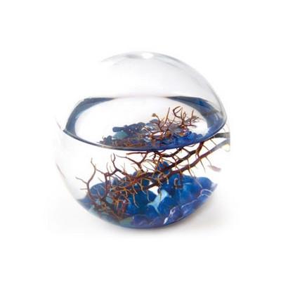 Ecosphère écosytème ronde 10 cm méditerranée cailloux bleus crevettes