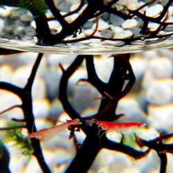 Ecosphere ecosysteme crevettes