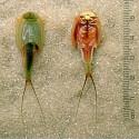 Ecosphère crevettes